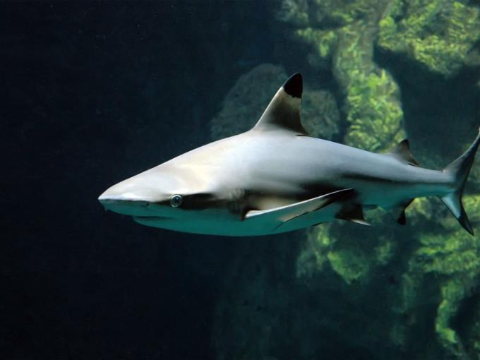 Schwarzspitzenriffhai im Haus des Meeres in Wien. JUFA Hotels bietet erlebnisreichen Städtetrip für die ganze Familie.