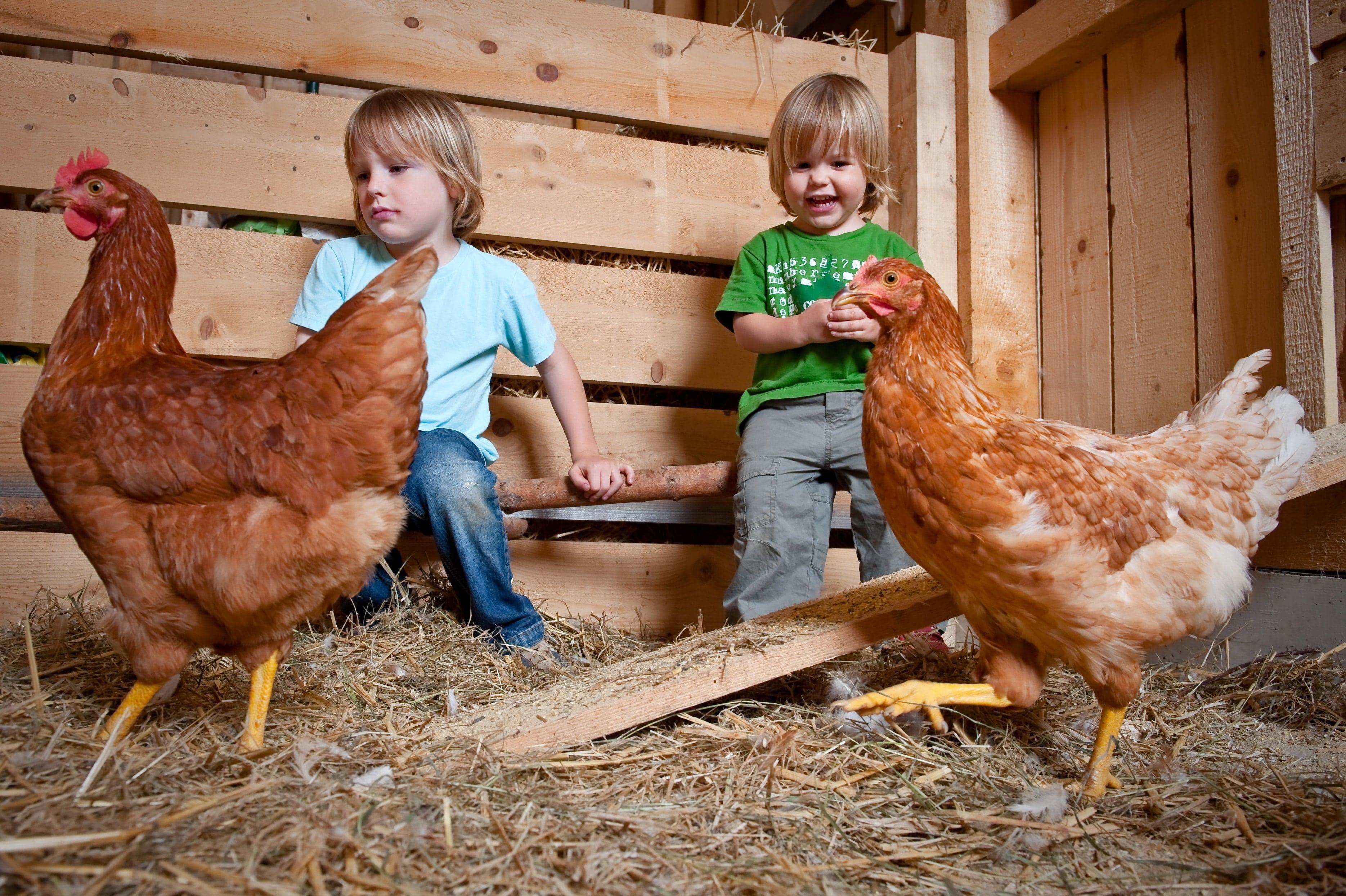 kinder mit Hühnern im Streichelzoo im JUFA Hotel Tieschen Landerlebnis. JUFA Hotels bietet Ihnen den Ort für erlebnisreichen Natururlaub für die ganze Familie.