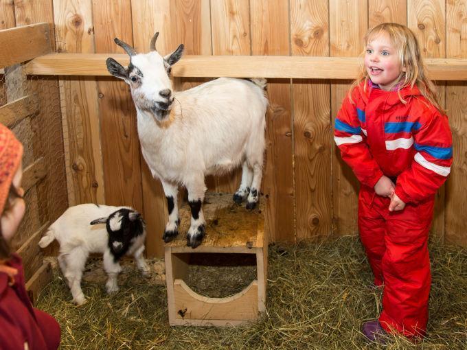 Kindern mit Ziegen im Streichelzoo im JUFA Hotel Gitschtal Landerlebnis