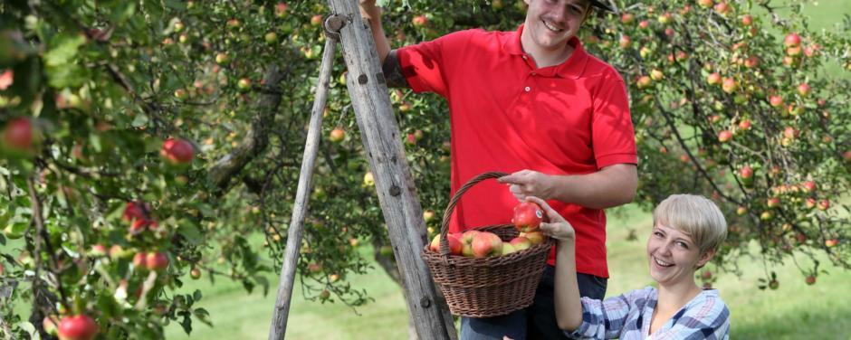 Paar plückt Äpfel vom Baum in der Oststeiermark. JUFA Hotels bietet Ihnen den Ort für erlebnisreichen Natururlaub für die ganze Familie.