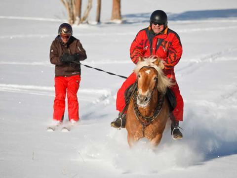 Skifahrerin wird von Pferd beim Skijöring gezogen im Marizaller Land im JUFA Hotel Urlaub. Der Ort für erholsamen Familienurlaub und einen unvergesslichen Winterurlaub.