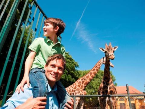 Tiergarten Schoenbrunn in Wien mit Vater und Junge vor Giraffengehäge im Sommer. JUFA Hotels bietet erlebnisreichen Städtetrip für die ganze Familie.