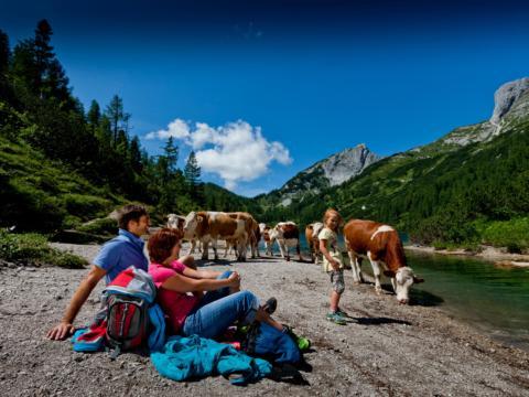 Wanderer sitzend am Staurersee in Taublitz mit Kühen im Sommer. JUFA Hotels bietet Ihnen den Ort für erlebnisreichen Natururlaub für die ganze Familie.