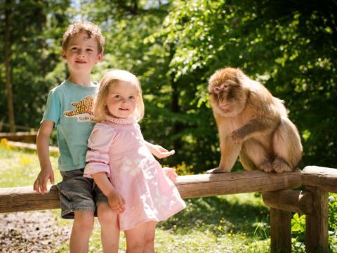 Zwei Kinder und ein Affe am Affenberg Salem in Baden-Württemberg im Sommer. JUFA Hotels bietet kinderfreundlichen und erlebnisreichen Urlaub für die ganze Familie.