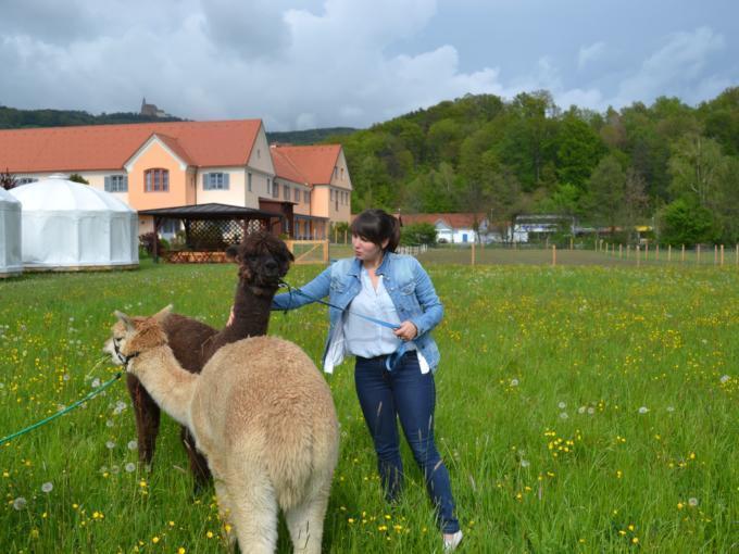 Alpakas kennenlernen im JUFA Hotel Pöllau Bio-Landerlebnis. Der Ort für erlebnisreichen Natururlaub für die ganze Familie.