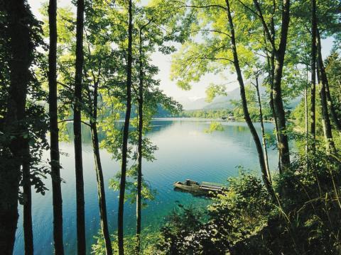 Wunderbarer Blick durch Bäume auf den Altausseer See im Salzkammergut in der Nähe von JUFA Hotels. Der Ort für tollen Sommerurlaub an schönen Seen für die ganze Familie.
