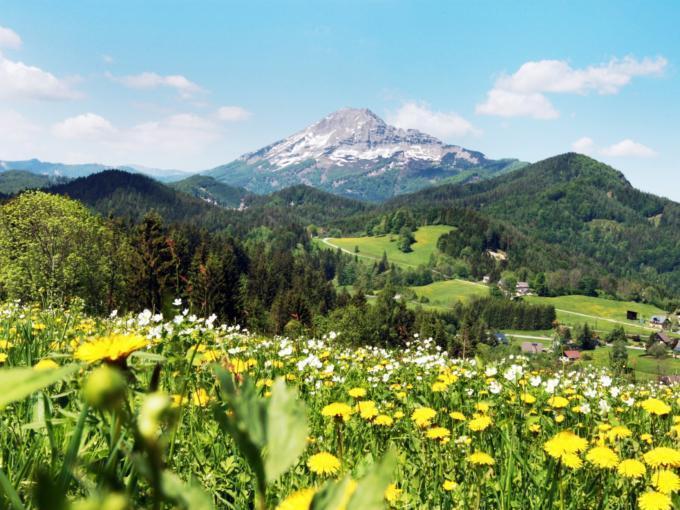 Blumenwiese in Annaberg mit Blick auf den Ötscher im Sommer in der Nähe von JUFA Hotels. Der Ort für erholsamen Familienurlaub und einen unvergesslichen Winter- und Wanderurlaub.