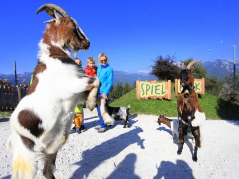 Familie beobachtet Ziegenböcke am Der Wilde Berg Mautern im Mariazellerland-Hochsteiermark in der Nähe von JUFA Hotels. Der Ort für erholsamen Familienurlaub und einen unvergesslichen Winter- und Wanderurlaub.