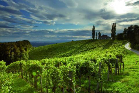 Weinfeld am Traminerweg Klöch in der Steiermark. JUFA Hotels bietet Ihnen den Ort für erlebnisreichen Natururlaub für die ganze Familie.