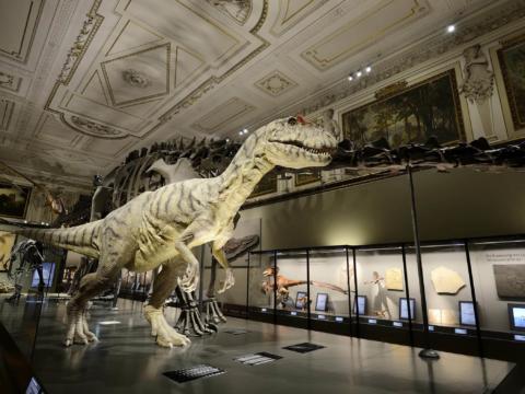 Dinosauria Rex im Sauria-Saal im Naturhistorischen Museum Wien. JUFA Hotels bietet erlebnisreichen Städtetrip für die ganze Familie und den idealen Platz für Ihr Seminar.