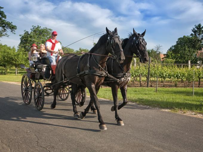 Pferdekutschenfahrt durch Landschaft in Transdanubien in Ungarn. JUFA Hotels bietet Ihnen den Ort für erlebnisreichen Natururlaub für die ganze Familie.