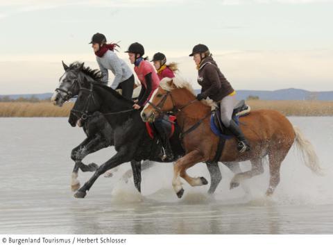 Sie sehen Reiterinnen im Galopp auf Pferden in einem Gewässer in Burgenland. JUFA Hotels bietet Ihnen den Ort für erlebnisreichen Natururlaub für die ganze Familie.