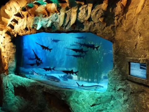 Aquarium mit Fischen im Sea Life Königswinter. JUFA Hotels bietet kinderfreundlichen und erlebnisreichen Urlaub für die ganze Familie.
