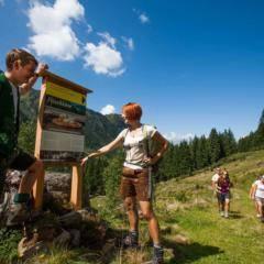 Junge Leute wandern im Ski- und Wandergebiet Planneralm im Sommer in der Nähe von JUFA Hotels. Der Ort für erholsamen Familienurlaub und einen unvergesslichen Winter- und Wanderurlaub.