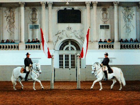 Sie sehen die spanische Hofreitschule in Wien mit zwei Lipizzanerpferden. JUFA Hotels bietet erlebnisreichen Städtetrip für die ganze Familie und den idealen Platz für Ihr Seminar.