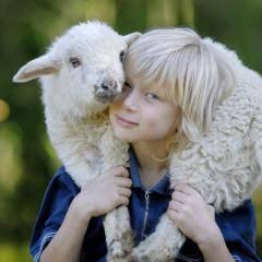 Junge hat Lamm über den Schultern in der Nähe von JUFA Hotels. Der Ort für erlebnisreichen Natururlaub für die ganze Familie.
