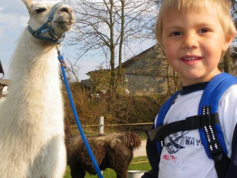 Sie sehen die Wanderung eines Kindes mit einem Lama im Waldviertel. JUFA Hotels bietet kinderfreundlichen und erlebnisreichen Urlaub für die ganze Familie.