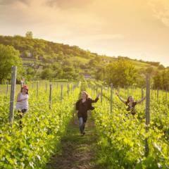 Frauen laufen durch Weinfeldt in der Thermenregion Ungarn in der Nähe vom JUFA Vulkan Thermen-Resort. Der Ort für erholsamen Thermen- und entspannten Wellnessurlaub für die ganze Familie.
