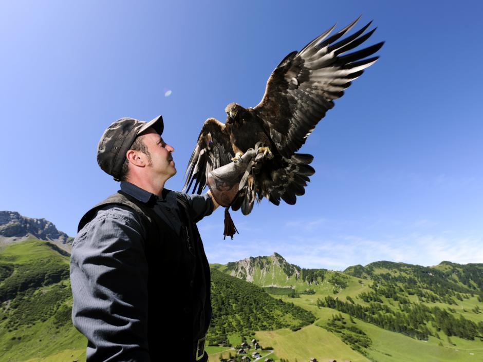 Sie sehen einen Mann mit Falken der Falknerei Galina am Arm in Triesenberg. JUFA Hotels bietet Ihnen den Ort für erlebnisreichen Natururlaub für die ganze Familie.