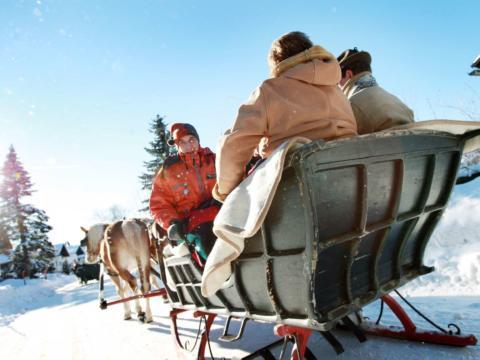Erwachsene genießen eine Pferdeschlittenfahrt in Annaberg durch die wunderschöne Winterlandschaft. JUFA Hotels bietet erholsamen Familienurlaub und einen unvergesslichen Winterurlaub.