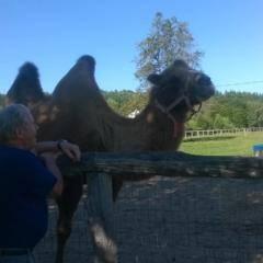 Kamel im Gehege mit Mini-Burji Al Arab direkt bei Pechmann's alte Ölmühle. JUFA Hotels bieten erholsamen Familienurlaub und einen unvergesslichen Winter- und Wanderurlaub.