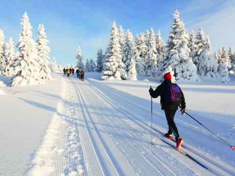 Ein einzelner Langläufer folgt einer Gruppe von Langläufern auf einer gut präparierten Loipe. JUFA Hotels bietet erholsamen Familienurlaub und einen unvergesslichen Winterurlaub.