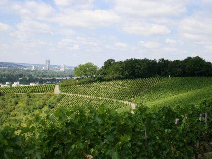 Ein Weinberg in Oberdollendorf mit Blick auf Bonn. JUFA Hotels bietet erlebnisreiche Städtetrips für die ganze Familie und den idealen Platz für Ihr Seminar.
