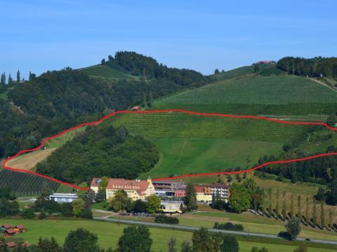 Blick von oben auf den Weinlehrpfad Silberberg in der Steiermark. JUFA Hotels bietet Ihnen den Ort für erlebnisreichen Natururlaub für die ganze Familie.