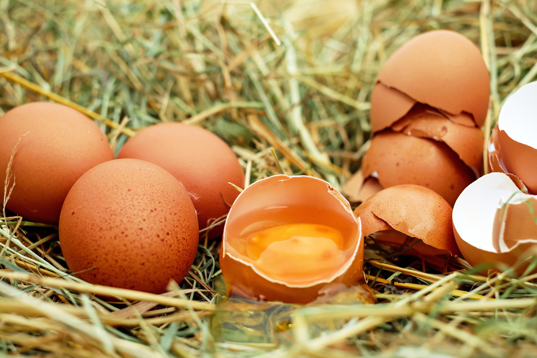Sie sehen braune Eier im Stroh liegen. JUFA Hotels bietet kinderfreundlichen und erlebnisreichen Urlaub für die ganze Familie.