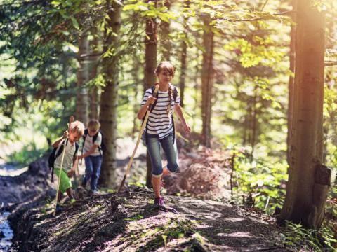 Drei Kinder im Alter von 7 bis 10 Jahren haben Spaß beim Wandern durch einen Wald im Sommer. JUFA Hotels bietet erlebnisreiche und kreative Schulprojektwochen in abwechslungsreichen Regionen.