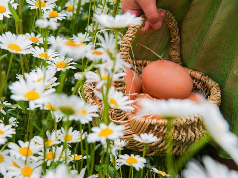 Sie sehen Eier vom Geflügelhof Kaltenegger-Felfer in Rattenberg. JUFA Hotels bietet kinderfreundlichen und erlebnisreichen Urlaub für die ganze Familie.