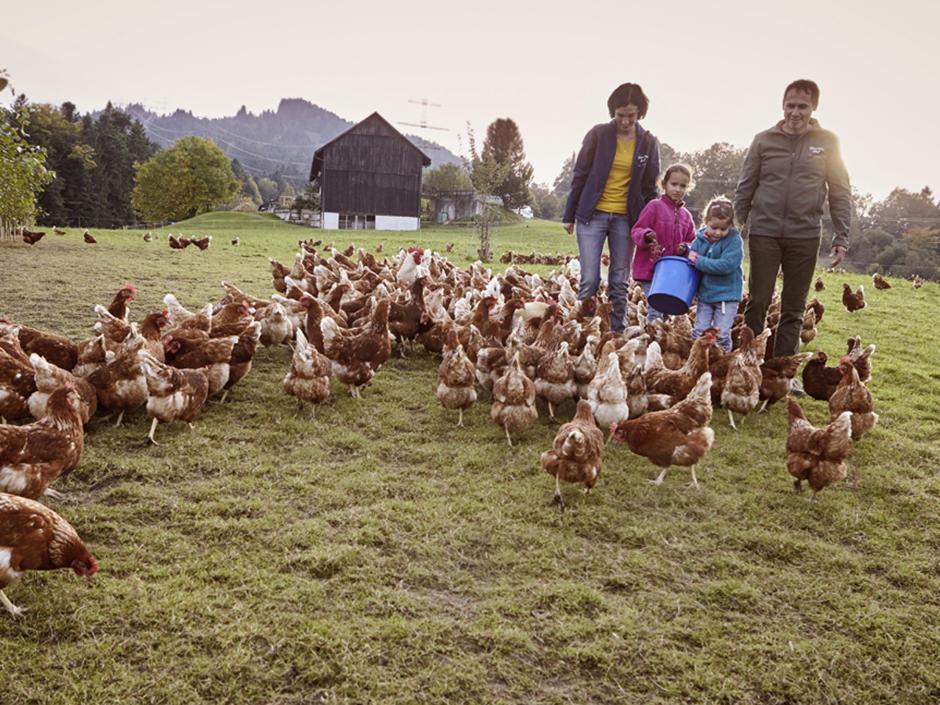 Sie sehen Hühner für Freilandeier des Martinshofs. JUFA Hotels bietet kinderfreundlichen und erlebnisreichen Urlaub für die ganze Familie.
