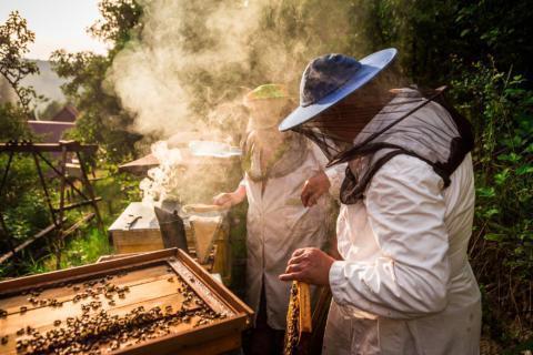 Sie sehen Imker beim Ernten am Bienenstock. JUFA Hotels bietet kinderfreundlichen und erlebnisreichen Urlaub für die ganze Familie.