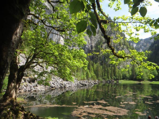 Sie sehen den Kammersee mit Bäumen im Sommer. JUFA Hotels bietet tollen Sommerurlaub an schönen Seen für die ganze Familie.