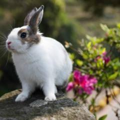 Kaninchen sitzt im frühlingshaften Garten. JUFA Hotels bieten erholsamen Familienurlaub und einen unvergesslichen Winter- und Wanderurlaub.