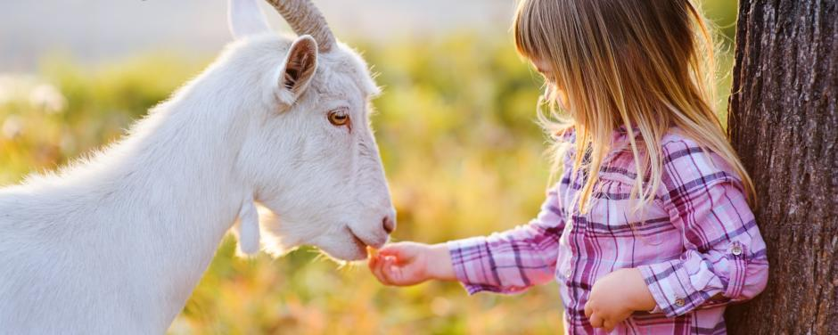 Kleines Mädchen füttert weiße Ziege im Freien. JUFA Hotels bieten erholsamen Familienurlaub und einen unvergesslichen Winter- und Wanderurlaub.