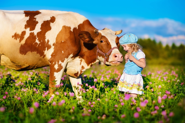 Kleines Mädchen mit Kuh auf Blumenwiese. JUFA Hotels bieten erholsamen Familienurlaub und einen unvergesslichen Winter- und Wanderurlaub.