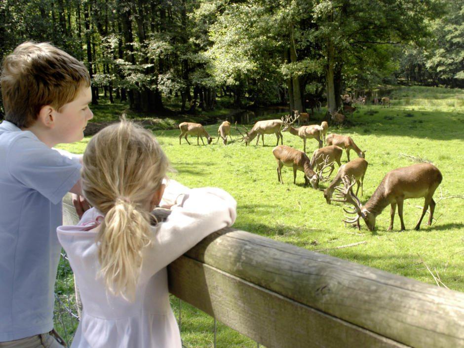 Der Tierpark Hagenbeck ist ein Erlebnis für die ganze Familie, wo man Rehe auf grünen Wiesen und am Waldrand beobachten kann. Es eignet sich ideal als Tagesausflug vom JUFA Hotel Hamburg HafenCity.