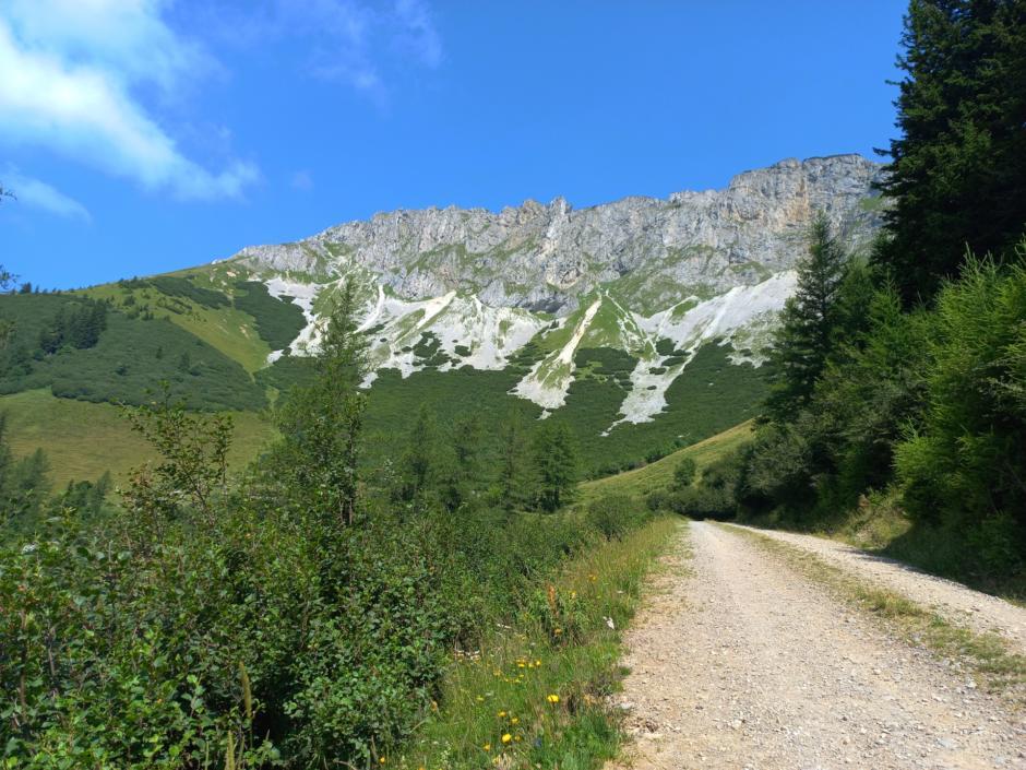 Sie sehen die schöne Natur rund um dem Brunnalm-Panoramawanderweg Natur.