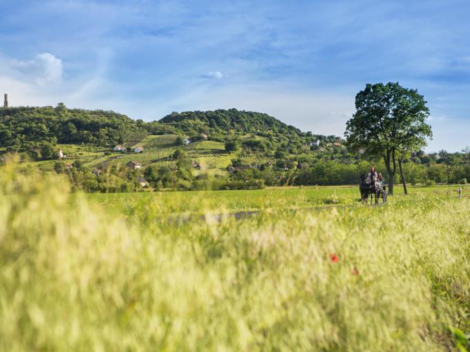 Wunderschöne Landschaft rund um den Sagberg in Ungarn mit einer Pferdekutsche in der Nähe von JUFA Hotels. Der Ort für erholsamen Familienurlaub und einen unvergesslichen Winter- und Wanderurlaub.