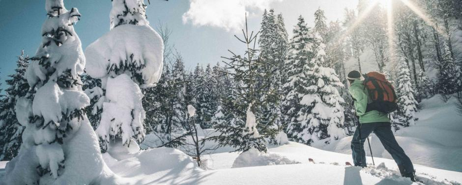 Sie sehen einen Skitourengeher im Tiefschnee durch den Wald im Nationalpark Gesäuse gehen.