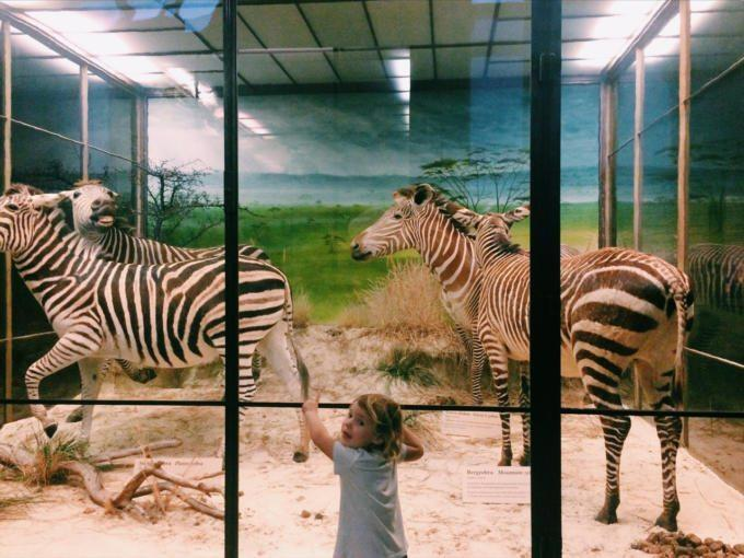Mit Kindern ist der der Tiergarten Schönbrunn immer einen Besuch wert. Hier im Gehege mit den Zebras.
