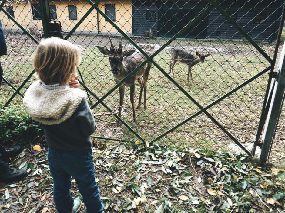 Ein Naturerlebnis für die ganze Familie ist der Nationalpark Lobau.