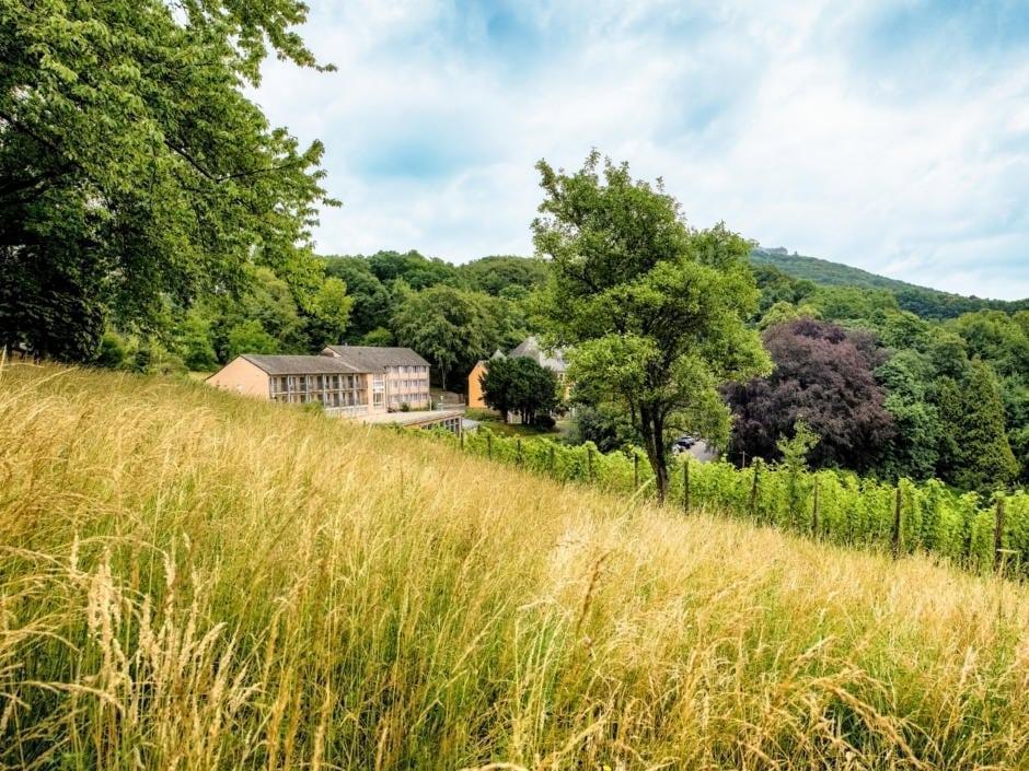 Sie sehen einen Weinberg am JUFA Hotel Königswinter/Bonn im Sommer. JUFA Hotels bietet erlebnisreichen Städtetrip für die ganze Familie und den idealen Platz für Ihr Seminar.