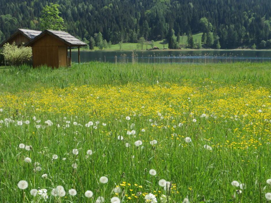 Sie sehen den Weissensee in Kärnten mit einer Feuchtwiese. JUFA Hotels bietet tollen Sommerurlaub an schönen Seen für die ganze Familie.
