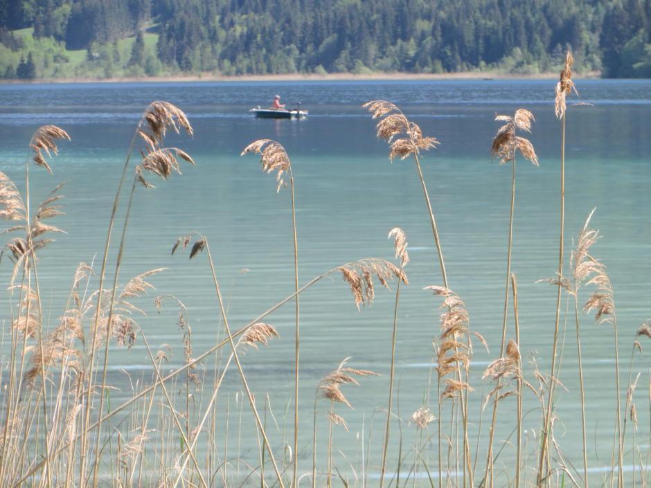 Sie sehen den Weissensee in Kärnten mit Schilf. JUFA Hotels bietet tollen Sommerurlaub an schönen Seen für die ganze Familie.
