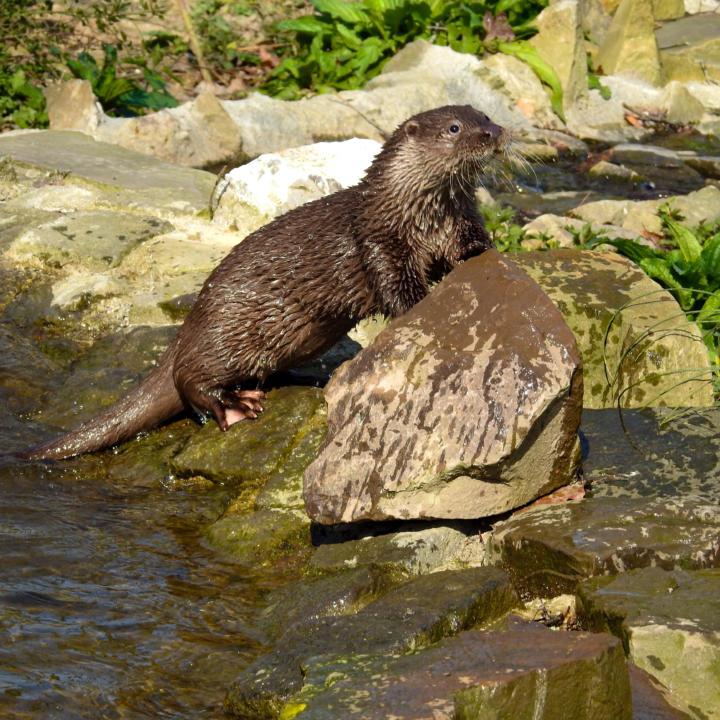 Sie sehen einen Zoo im Brückenkopf-Park im JUFA Hotel im Brückenkopfpark/Jülich***s. Der Ort für kinderfreundlichen und erlebnisreichen Urlaub für die ganze Familie.